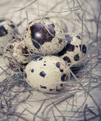Easter eggs in a nest from a dry grass