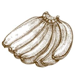 engraving illustration of bananas