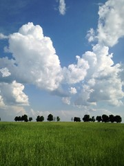 clouds over a field
