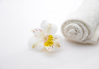 beautiful orchid with white roller towel