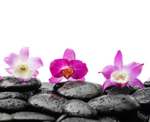 Still life with three orchid on wet black stones