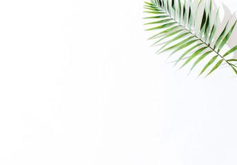 areca palm leaves