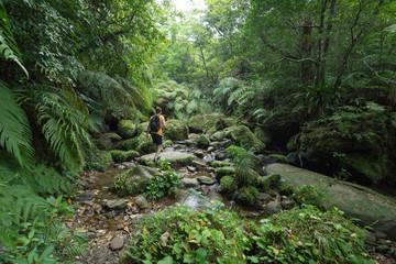 Man hiking through dense tropical rainforest and lush green jungle in Iriomote island, Okinawa, tropical Japan