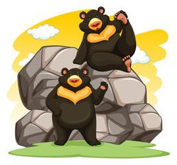 Two playful bears