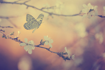 Garden Poster Spring Pastel colored photo of butterfly and spring flowers