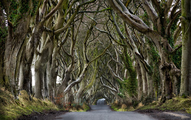 Dark Hedges, Northern Ireland