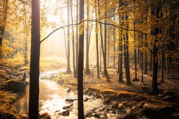 Fond de hotte en verre imprimé Bestsellers Wenn das Licht im Walde scheint