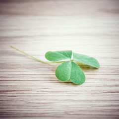 Closeup clover leaf on wooden background.