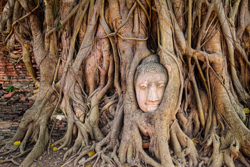 Ancient buddha head embeded in banyan tree from Ayutthaya, Thail