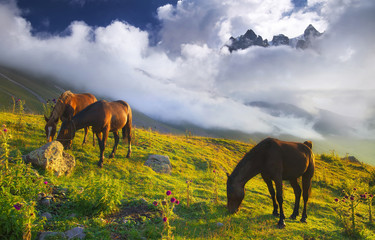 Horses in mountain valley. Natural landscape with animals