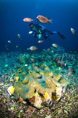 diver above coral bunaken sulawesi indonesia underwater photo
