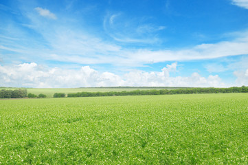 green field and blue sky with light clouds