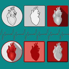 Human heart icon with cardiogram - vector