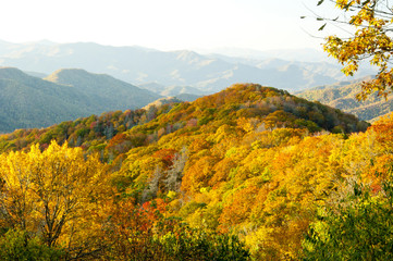Top of the Great Smoky Mountains in fall.