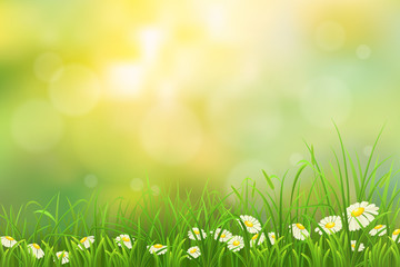Spring nature background with green grass and chamomiles