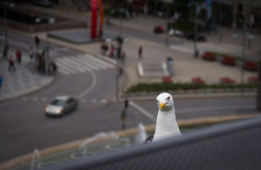 Sceptic Bird