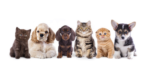 Group of  dogs and  kittens