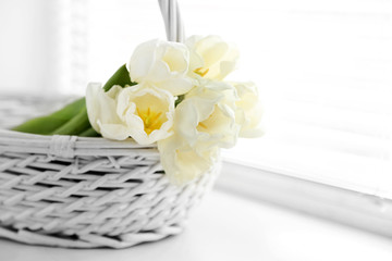 White beautiful tulips in light interior