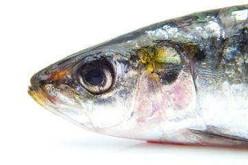 cabeza de sardina