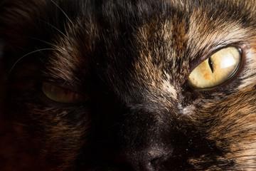 Tortoiseshell cat's face in the dark