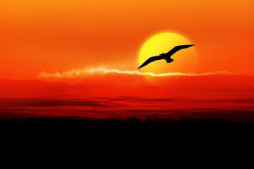 Fond de hotte en verre imprimé Dauphins Möwe und Sonnenuntergang
