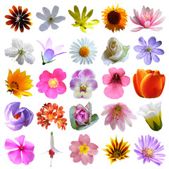 colorful flowers collection