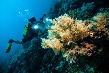 diver take a photo video coral kapoposang indonesia scuba diving