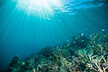 sun shine scuba diver kapoposang sulawesi indonesia underwater