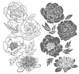 Set of hand drawn peonies.
