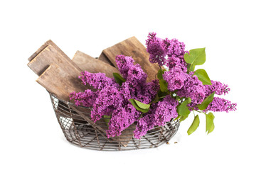 summer lilac flowers in basket on a white background