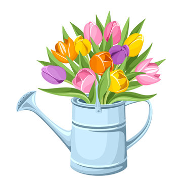 Bouquet of tulips in watering can. Vector illustration.