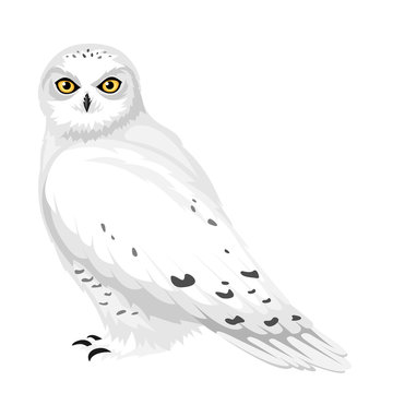 Snowy owl. Vector illustration.