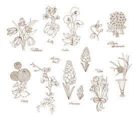 A variety of flowers for spring and summer in hand drawn style