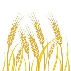 Field of Wheat - illustration
