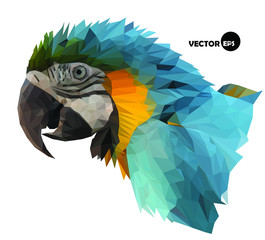macaw parrot`s head visual identity in low polygon