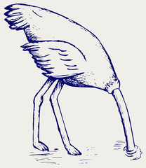 Ostrich burying its head in sand. Doodle style