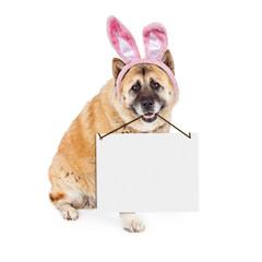 Wall Mural - Easter Bunny Akita Dog Carrying Blank Sign