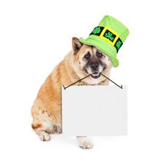 Wall Mural - St Patricks Akita Dog Carrying Blank Sign