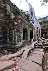 Ta Prohm temple with big tree and roots.