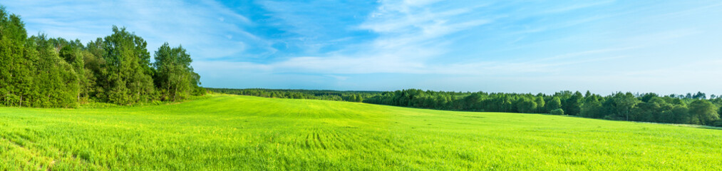 Aluminium Prints Lime green summer rural landscape a panorama with a field and the blue sky