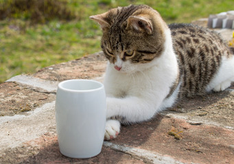 Cat with coffee mug in the morning