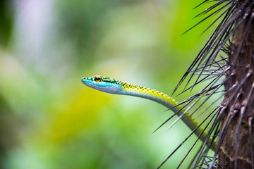 Green, Blue, and Yellow Snake