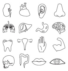 Human anatomy icons set