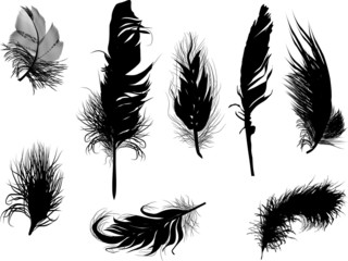 eight black fluffy feathers isolated on white