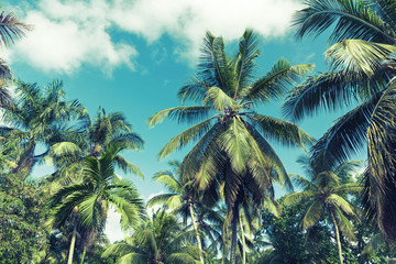 Coconut palm trees over cloudy sky background Wall mural