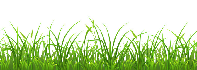 Wall Mural - Seamless fresh green grass on white background