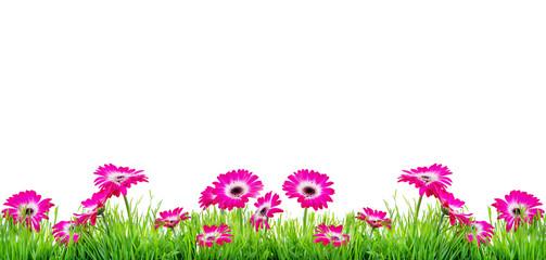 Wall Mural - Rosa Blumen auf Wiese Hintergrund