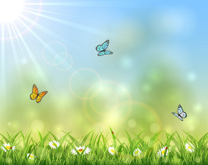 Sunny background with butterflies
