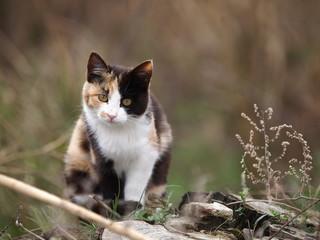 幼い三毛猫