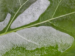 thin brittle ice